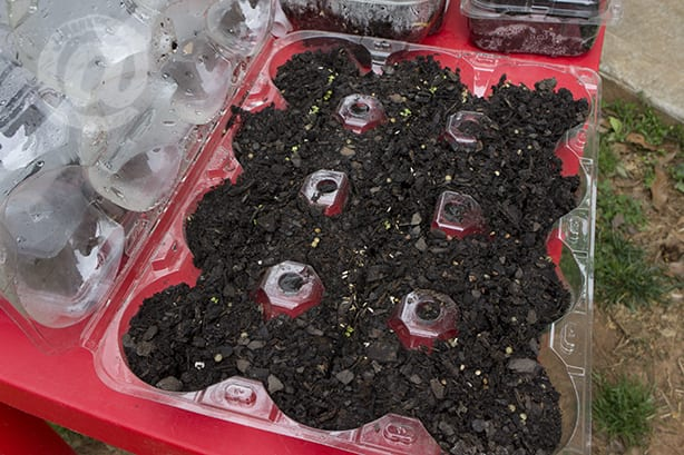 Fruit Carton Seed Starter