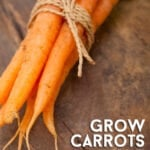Grow Carrots in 5 Easy Steps