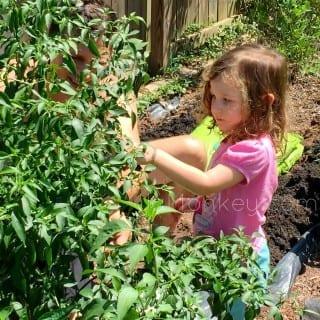 Growing Organic Kids