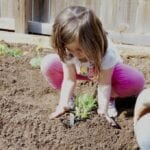 Deciding What Vegetables to Grow in Your Garden