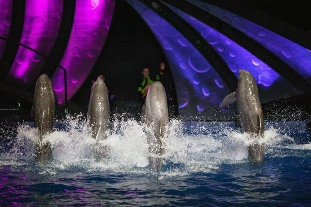 AT&T Dolphin Celebration_119