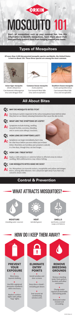 ORKIN mosquito infographic