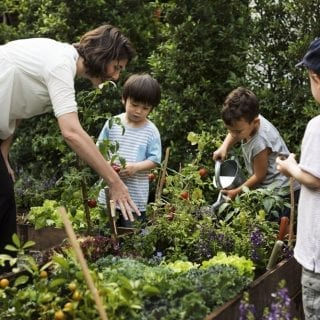 Have You Discovered the Benefits of the Amazing Farm to School Initiatives?