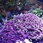 A Close Look at Coral Reef at the Georgia Aquarium