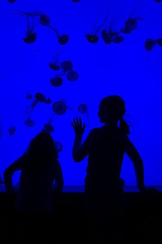 Ripley's Aquarium in Myrtle Beach, SC