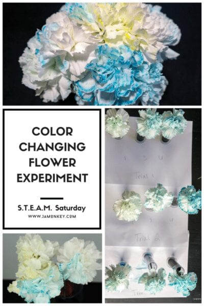 Color Changing Flower Experiment
