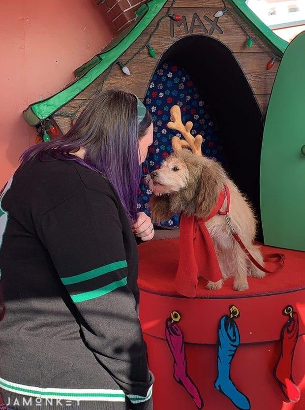 Max the dog at Grinchmas