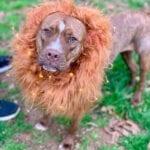 DIY Fantastic Beasts Zouwu Pet Costume